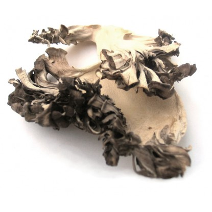 Dried Maitake - 1 Lb.