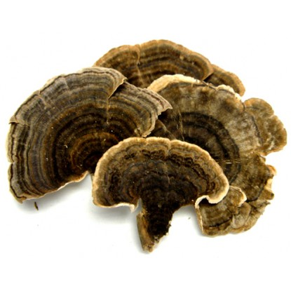 Dried Turkey Tail 4 oz.