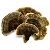 Dried Turkey Tail 1 lb.