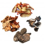 Royal Mushrooms Bundle - 2 oz x 4 bags
