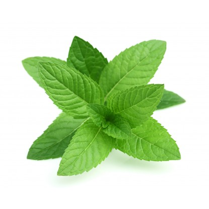 Natural Peppermint Extract (4 fl.oz)