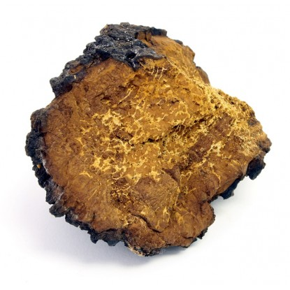 Dried Chaga Mushrooms 8 oz.