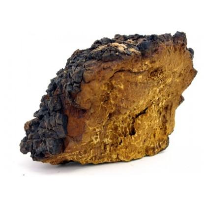 Dried Chaga Mushrooms 1 Lb.