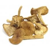 Candy Caps Mushroms 2 oz.